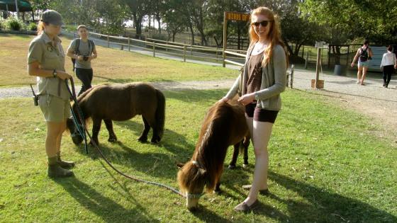 I dig a pony