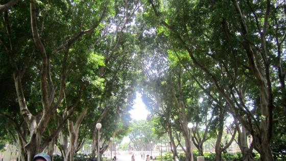 Lovely trees in the park