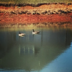 Geese spotted in VA