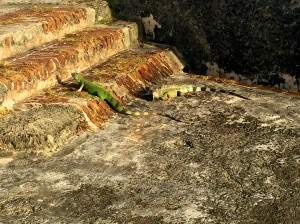 Iguanas at the castle