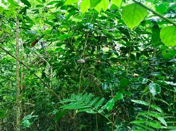 Lush foliage
